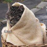【猫ポーズ2016年版】かわいいと人気の「キャベツ巻」「じゃまねこ」「ねこじた」