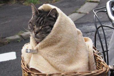 キャベツ猫