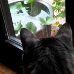 睡蓮鉢を眺める猫